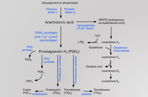 Prostaglandins and Eicosanoids Prostaglandins and inflammation: The PGs effects and functions